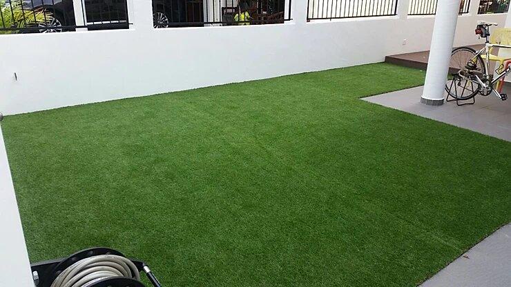 carpet grass singapore